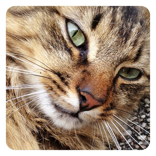 Macaron le chat