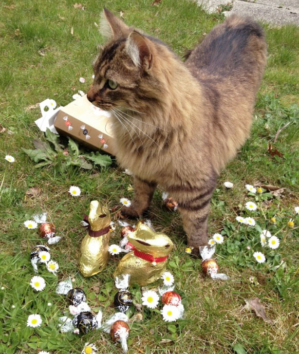 Macaron, le plus mignon des chatons
