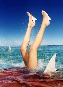 bucket list : nager avec des dauphins ou des requins